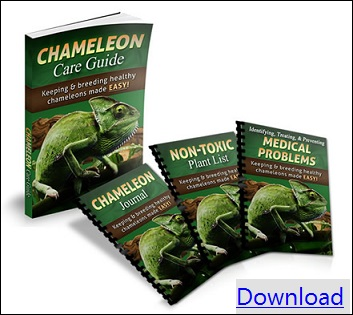 chameleon care guide download