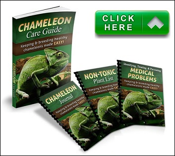 chameleon care guide pdf